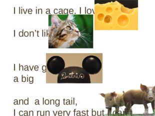 I live in a cage. I love I don't like I have got a big and a long tail, I can