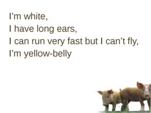 I'm white, I have long ears, I can run very fast but I can't fly, I'm yellow-