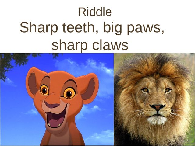 Riddle Sharp teeth, big paws, sharp claws