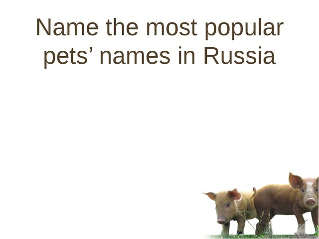 Name the most popular pets' names in Russia