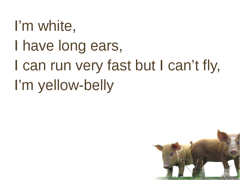 I'm white, I have long ears, I can run very fast but I can't fly, I'm yellow-...