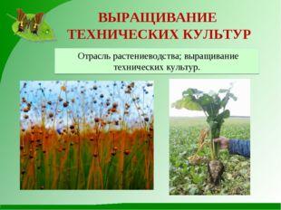 ВЫРАЩИВАНИЕ ТЕХНИЧЕСКИХ КУЛЬТУР Отрасль растениеводства; выращивание техничес