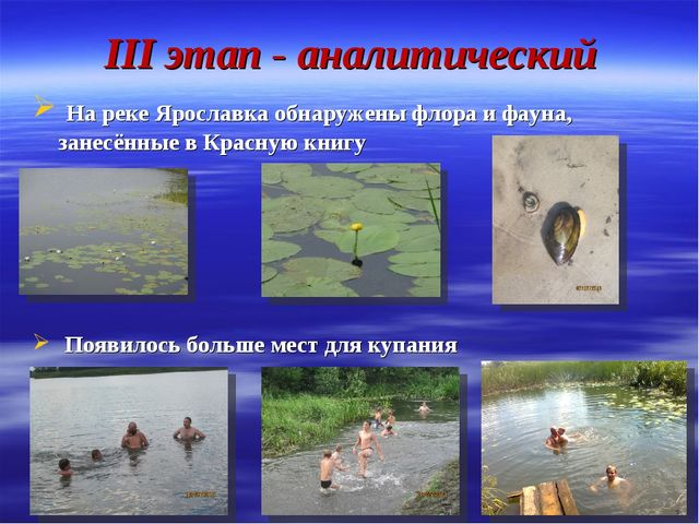 III этап - аналитический На реке Ярославка обнаружены флора и фауна, занесённ...