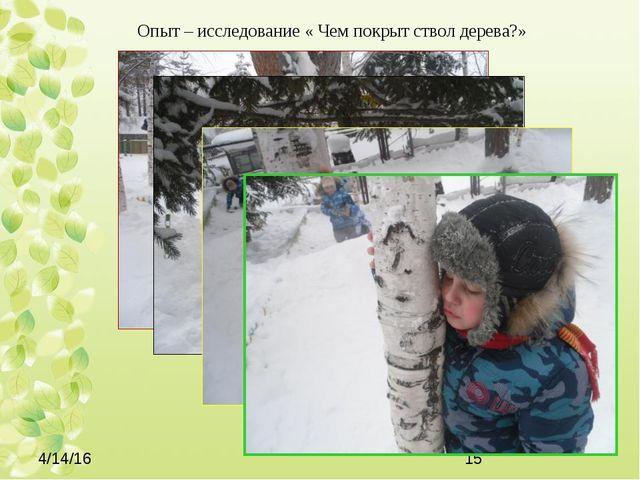 Опыт – исследование « Чем покрыт ствол дерева?»