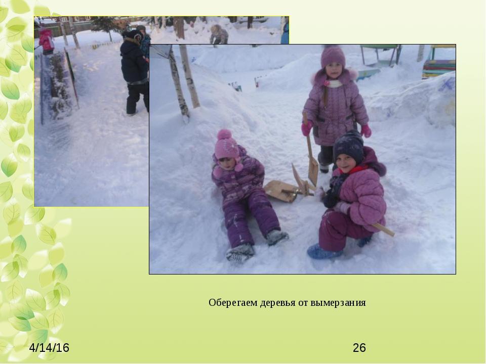 Оберегаем деревья от вымерзания