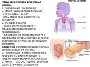 Тимус (вилочковая, или зобная железа) 1.Локализация-за грудиной. 2.Масса