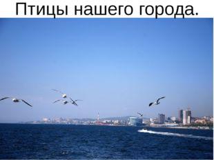 Птицы нашего города.
