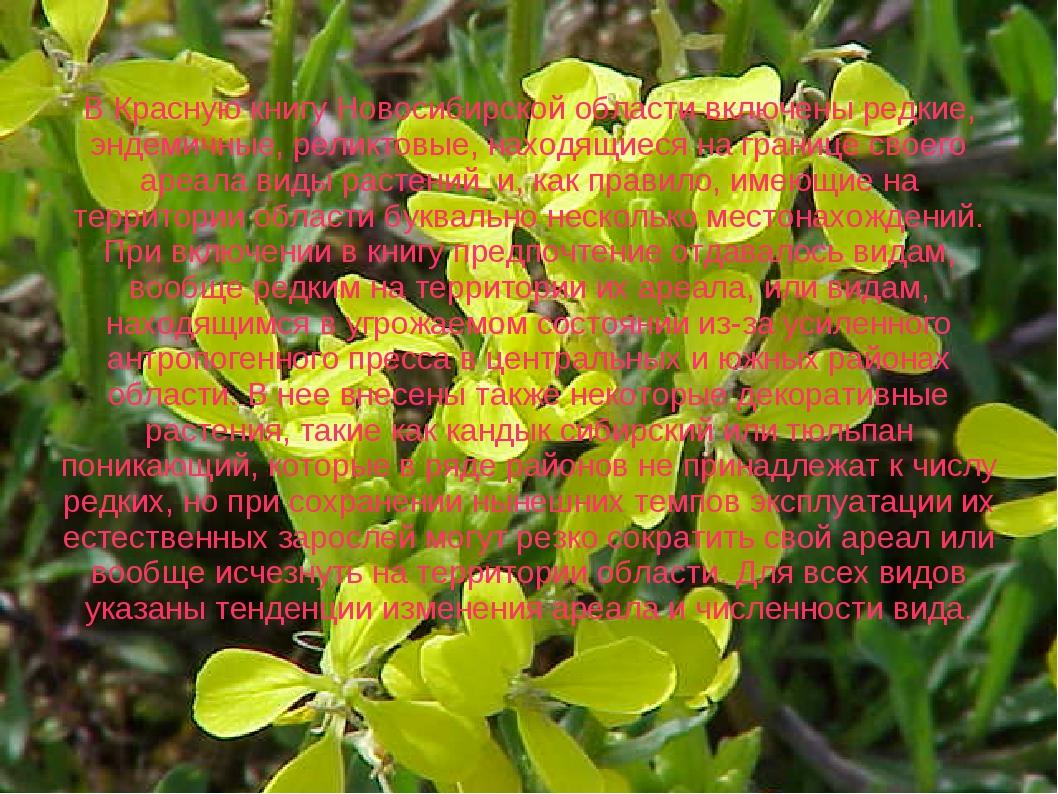 В Красную книгу Новосибирской области включены редкие, эндемичные, реликтовы...
