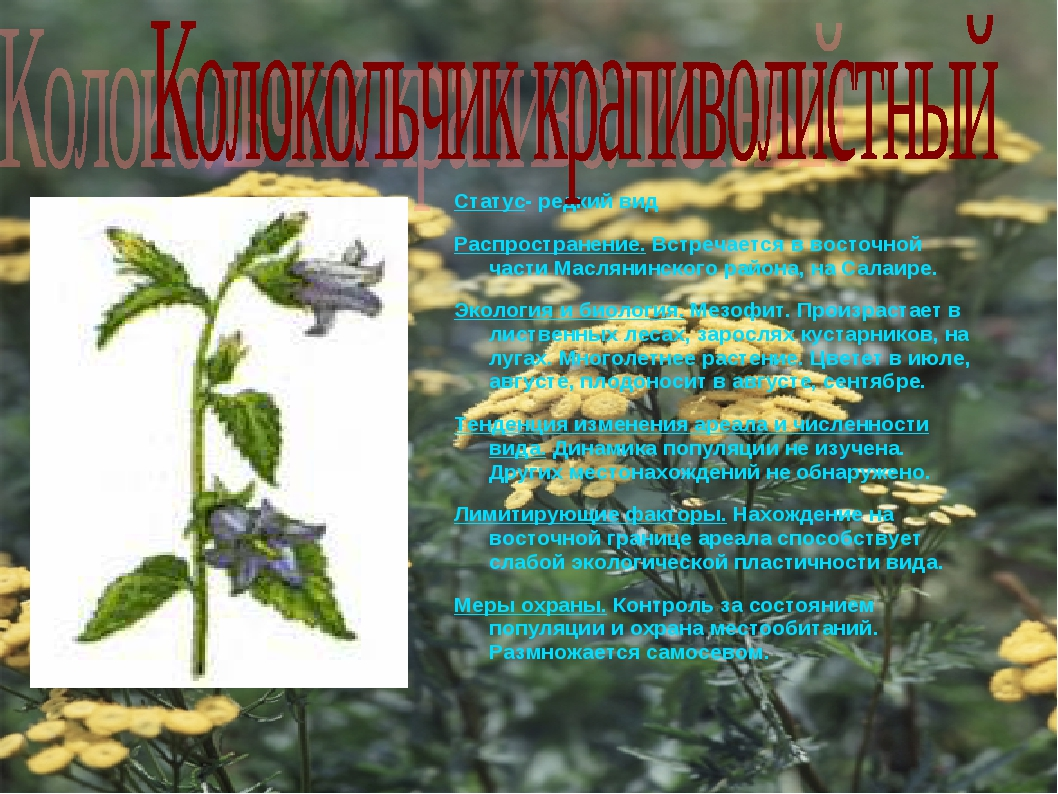 Статус- редкий вид Распространение. Встречается в восточной части Маслянинско...