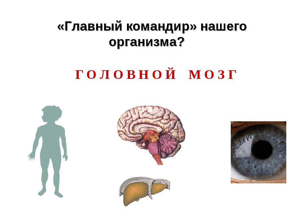 Г О Л О В Н О Й М О З Г «Главный командир» нашего организма?