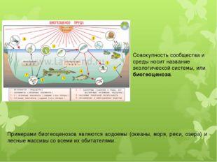 Совокупность сообщества и среды носит название экологической системы, или био