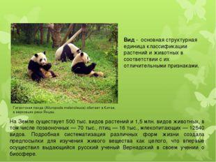 Вид - основная структурная единица классификации растений и животных в соотве