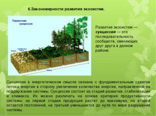 6.Закономерности развития экосистем. Развитие экосистем — сукцессия — это пос