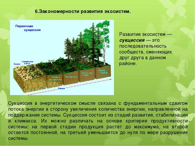 6.Закономерности развития экосистем. Развитие экосистем — сукцессия — это пос...