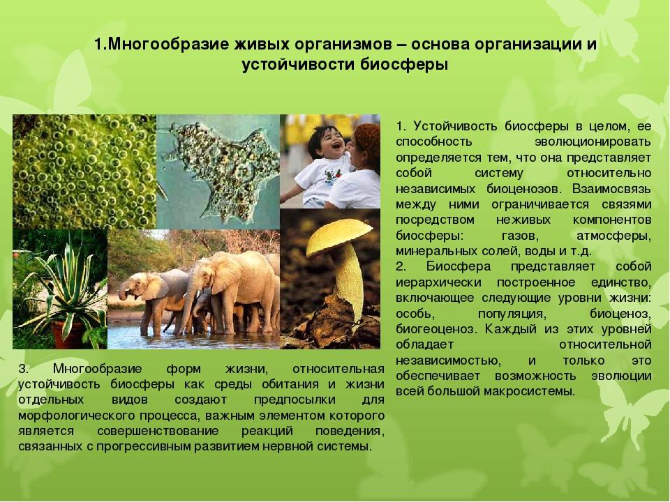 1.Многообразие живых организмов – основа организации и устойчивости биосферы...
