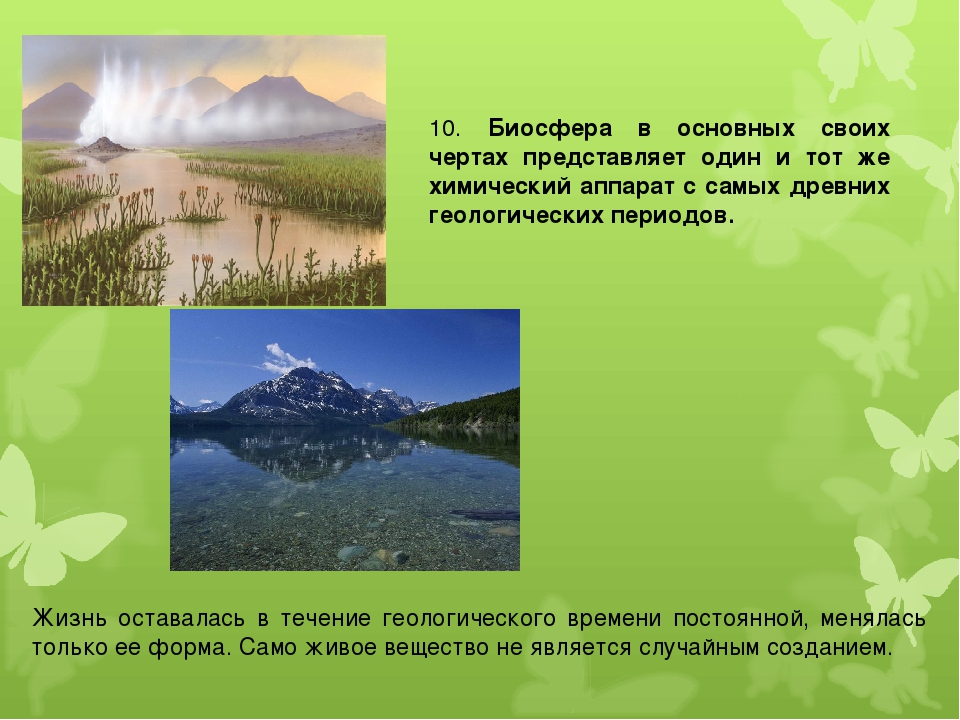 10. Биосфера в основных своих чертах представляет один и тот же химический ап...