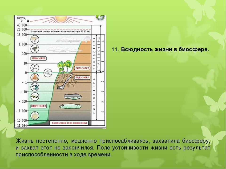 11. Всюдность жизни в биосфере. Жизнь постепенно, медленно приспосабливаясь,...