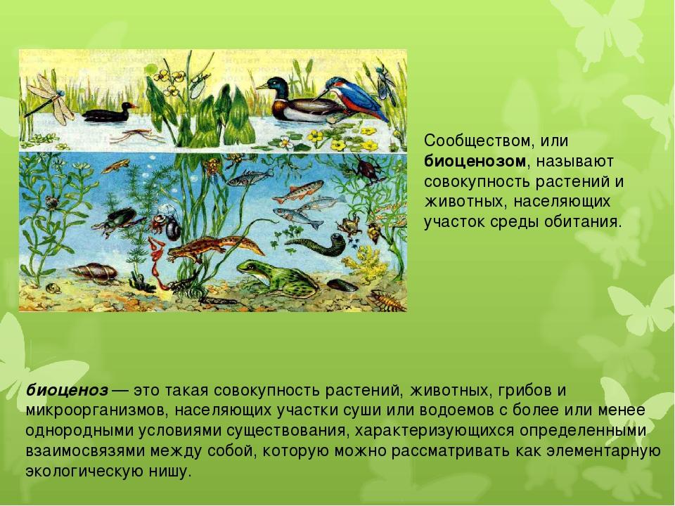 Сообществом, или биоценозом, называют совокупность растений и животных, насел...