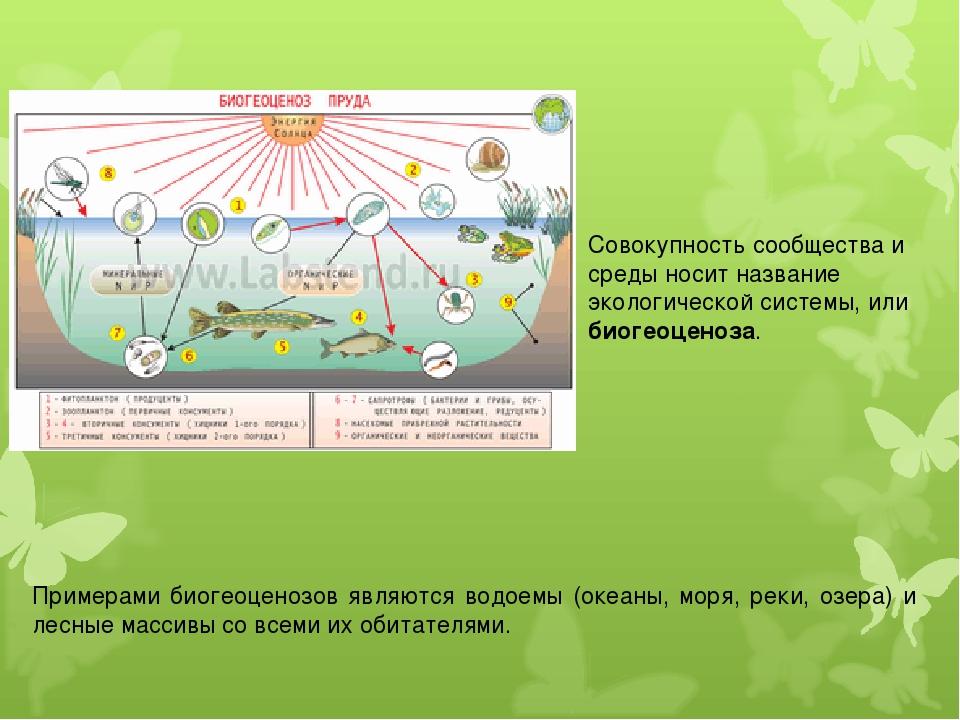 Совокупность сообщества и среды носит название экологической системы, или био...