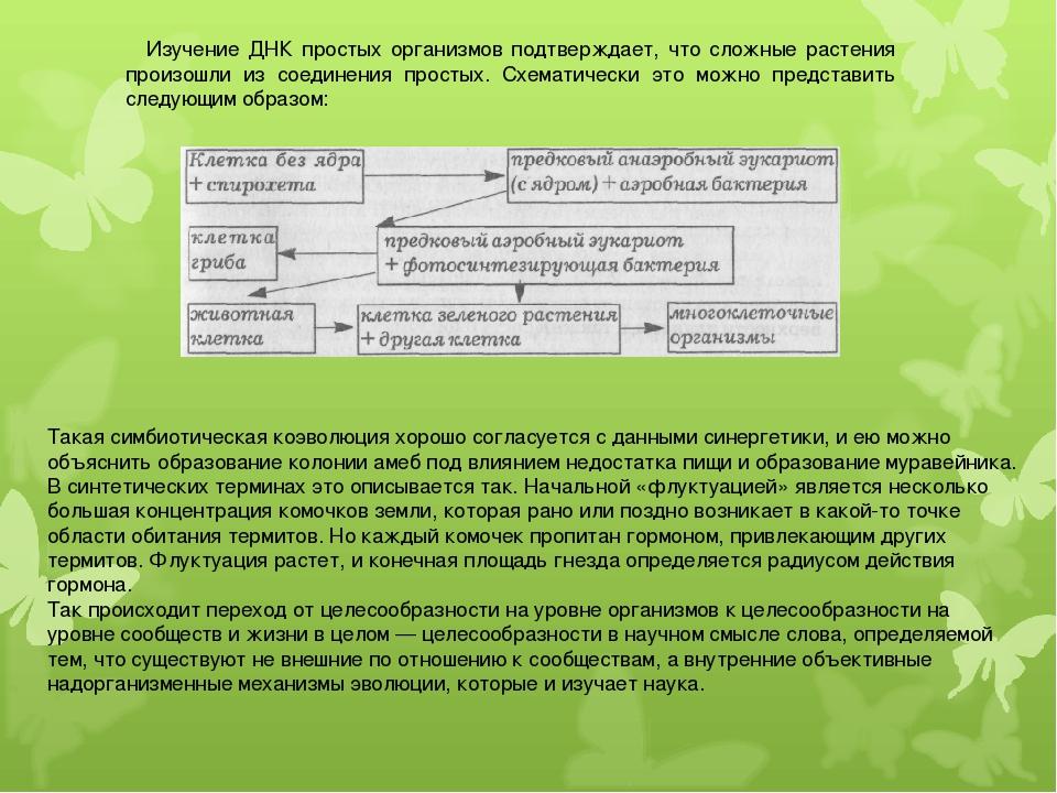 Изучение ДНК простых организмов подтверждает, что сложные растения произошли...