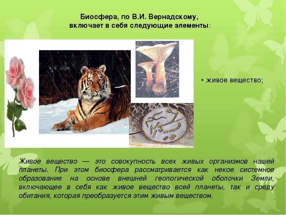 Биосфера, по В.И. Вернадскому, включает в себя следующие элементы: Живое веще...