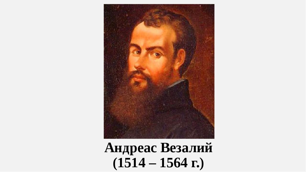 Андреас Везалий (1514 – 1564 г.)