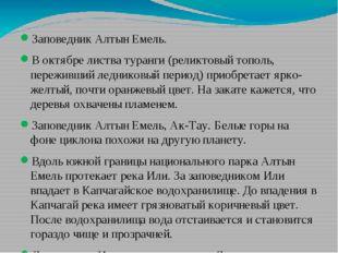 Заповедник Алтын Емель. В октябре листва туранги (реликтовый тополь, пережив