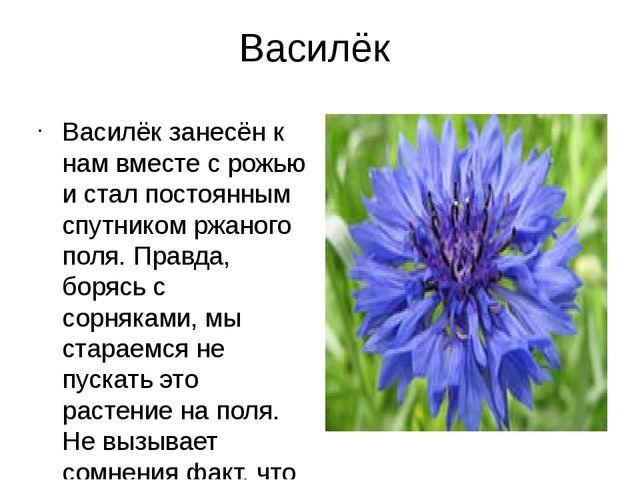 Василёк Василёк занесён к нам вместе с рожью и стал постоянным спутником ржан...