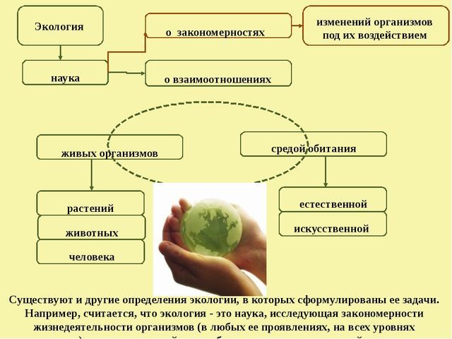 Экология наука о взаимоотношениях растений средой обитания животных человека...