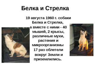 Белка и Стрелка 19 августа 1960 г. собаки Белка и Стрелка, а вместе с ними -