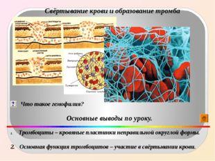 Свёртывание крови и образование тромба Что такое гемофилия? Основные выводы п