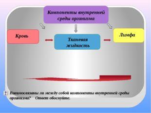 Компоненты внутренней среды организма Тканевая жидкость Кровь Лимфа Взаимосв