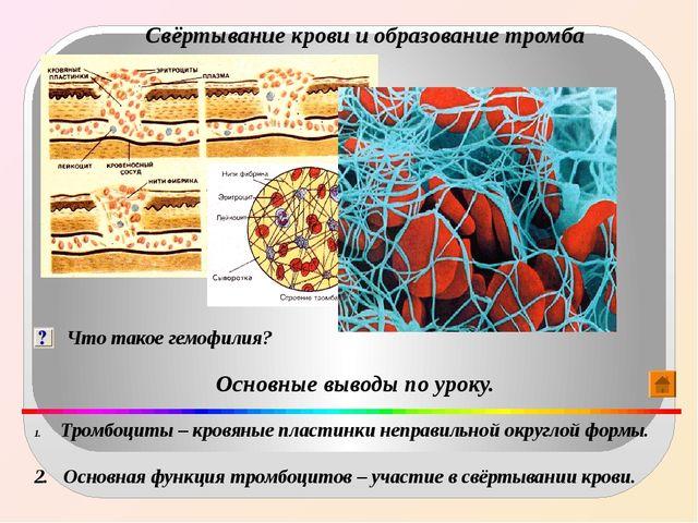 Свёртывание крови и образование тромба Что такое гемофилия? Основные выводы п...