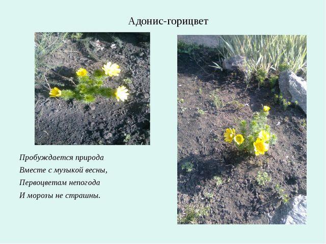 Пробуждается природа Вместе с музыкой весны, Первоцветам непогода И морозы н...