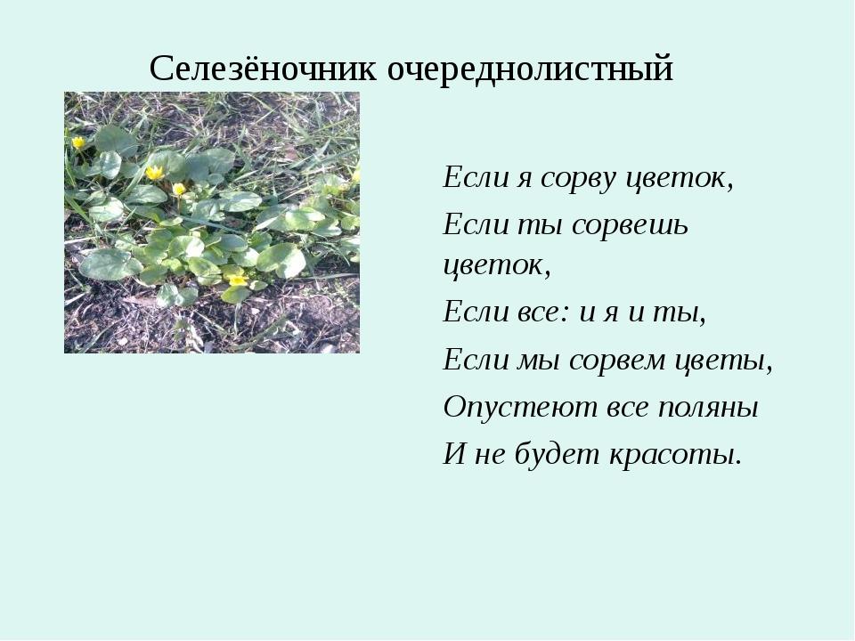 Если я сорву цветок, Если ты сорвешь цветок, Если все: и я и ты, Если мы сор...