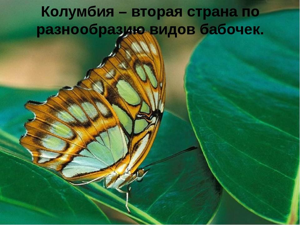 Колумбия – вторая страна по разнообразию видов бабочек.
