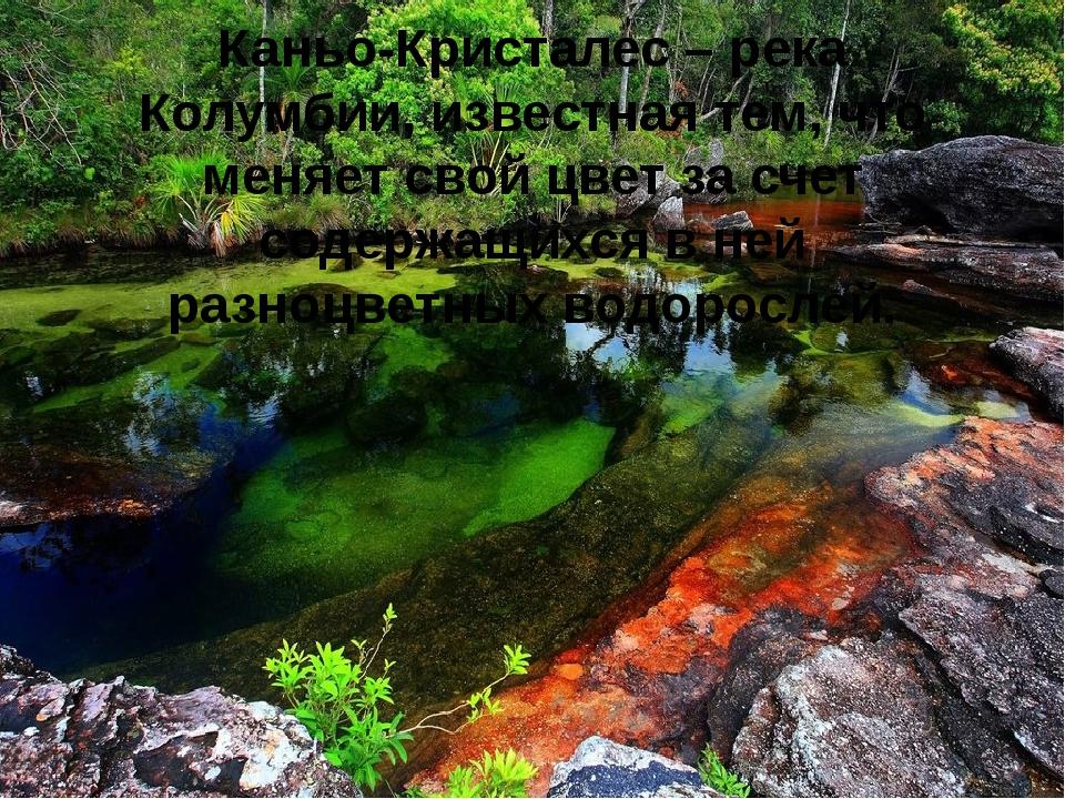 Каньо-Кристалес – река Колумбии, известная тем, что меняет свой цвет за счет...