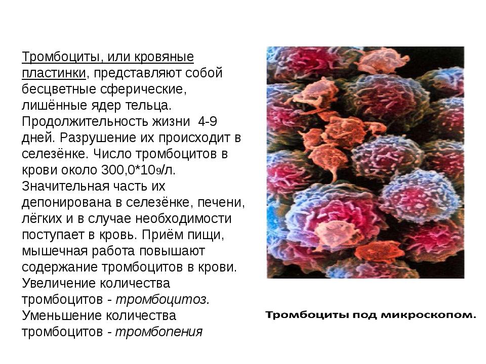 Тромбоциты, или кровяные пластинки, представляют собой бесцветные сферические...