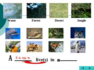Water Forest Desert Jungle live(s) in 3 л. ед. ч.