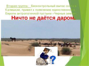 Вторая группа : Бесконтрольный выпас скота в Калмыкии, привел к появлению ед