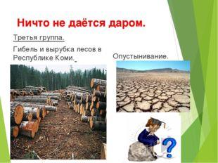 Ничто не даётся даром. Третья группа. Гибель и вырубка лесов в Республике Ком