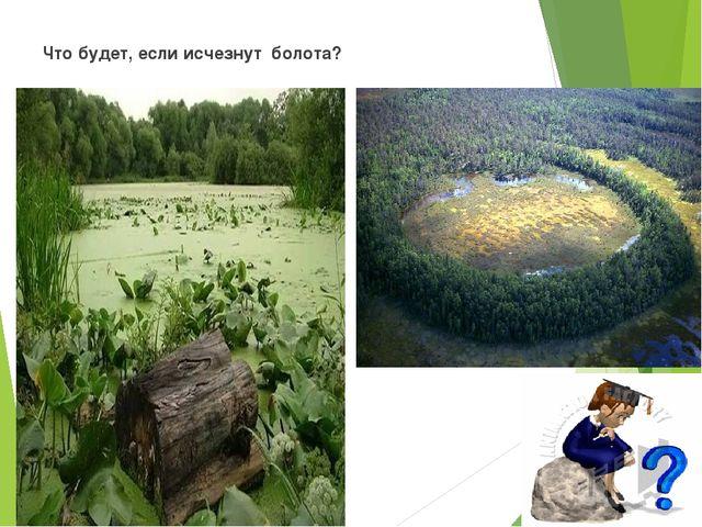 Что будет, если исчезнут болота?