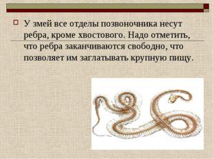 У змей все отделы позвоночника несут ребра, кроме хвостового. Надо отметить,