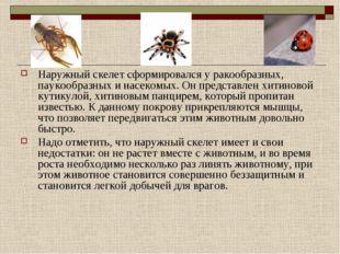 Наружный скелет сформировался у ракообразных, паукообразных и насекомых. Он п