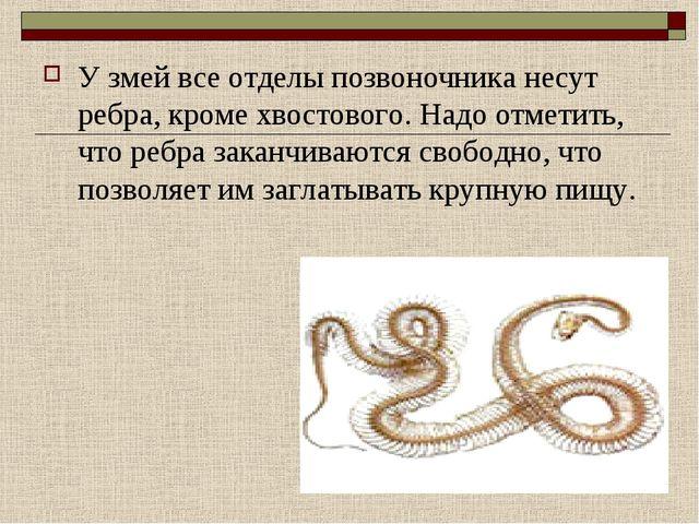 У змей все отделы позвоночника несут ребра, кроме хвостового. Надо отметить,...