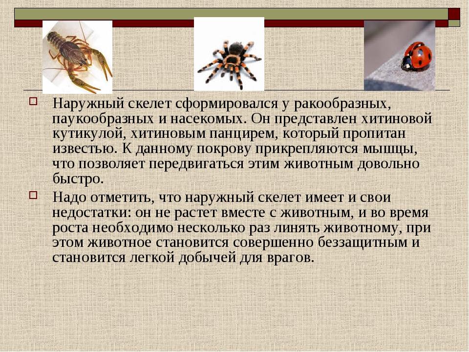 Наружный скелет сформировался у ракообразных, паукообразных и насекомых. Он п...