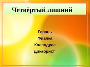 Герань Фиалка Календула Дикабрист Четвёртый лишний