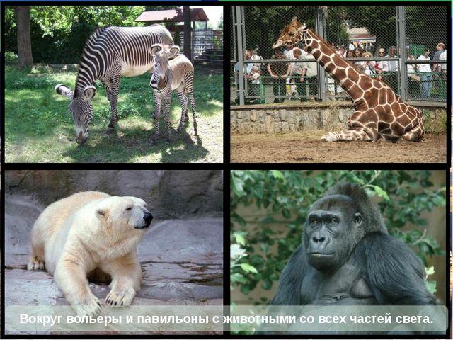 Вокруг вольеры и павильоны с животными со всех частей света.