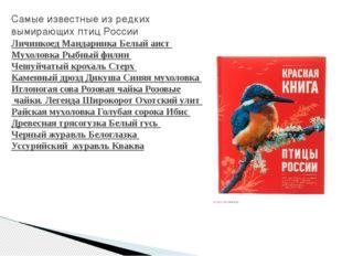 Самые известные из редких вымирающих птиц России Личинкоед Мандаринка Белый а
