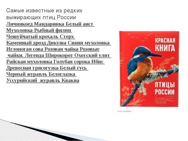 Самые известные из редких вымирающих птиц России Личинкоед Мандаринка Белый а...